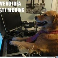 Chien qui tape sur un ordinateur